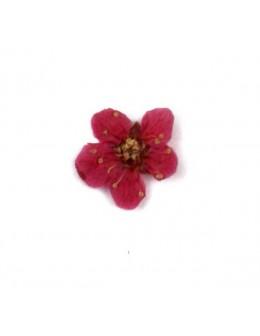 Kwiatki suszone płatki 20szt - ciemno różowe