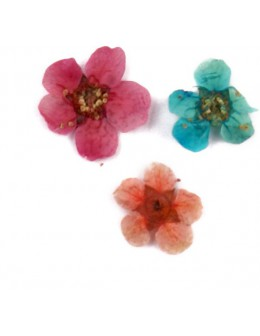 Kwiatki suszone płatki 20szt - mix kolorów