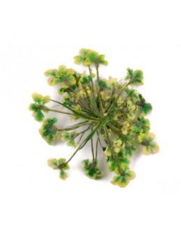 Kwiatki suszone 20szt - jasno zielone