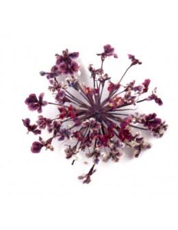 Kwiatki suszone 20szt - ciemno fioletowe