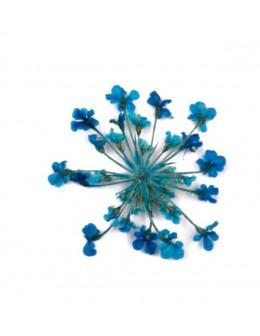 Kwiatki suszone 20szt - turkusowe