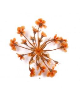 Kwiatki suszone 20szt - pomarańczowe