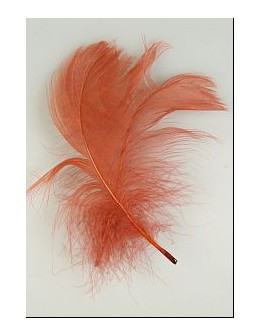 Pióro barwione 2szt - bordowe
